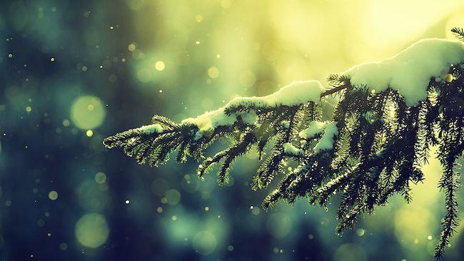 Bokeh-Photography-Winter-Snow-Christmas-Tree-Wallpaper